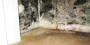 mold im wall